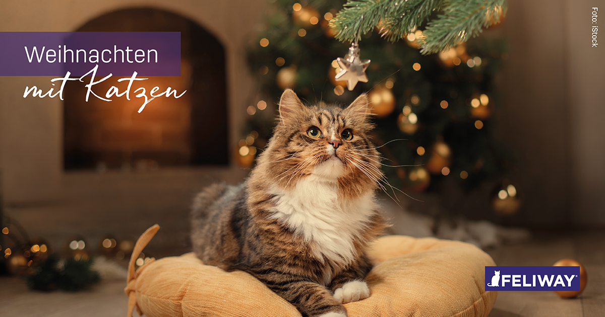 Weihnachten mit Katzen Teil 1: Der katzensichere Baum - Katzen ...