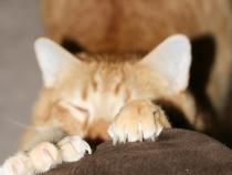 Katzen kratzen Erziehung