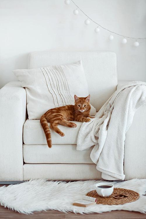 sch ner wohnen mit katze oder warum meine katze. Black Bedroom Furniture Sets. Home Design Ideas