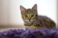 Katzenkinder-Teil1