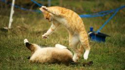 Koerpersprache-bei-Katzen_VS