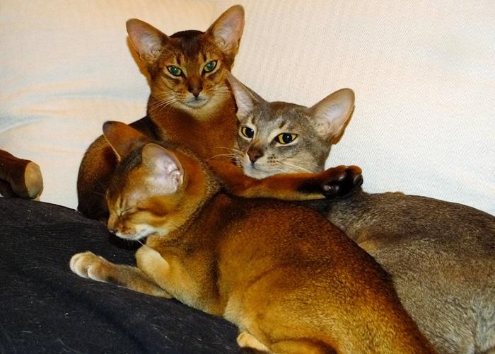 Mehrkatzenhaushalt-1