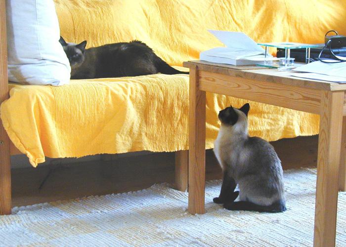 Mehrkatzenhaushalt-11