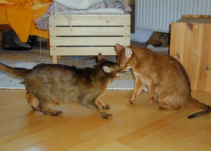 Mehrkatzenhaushalt-15