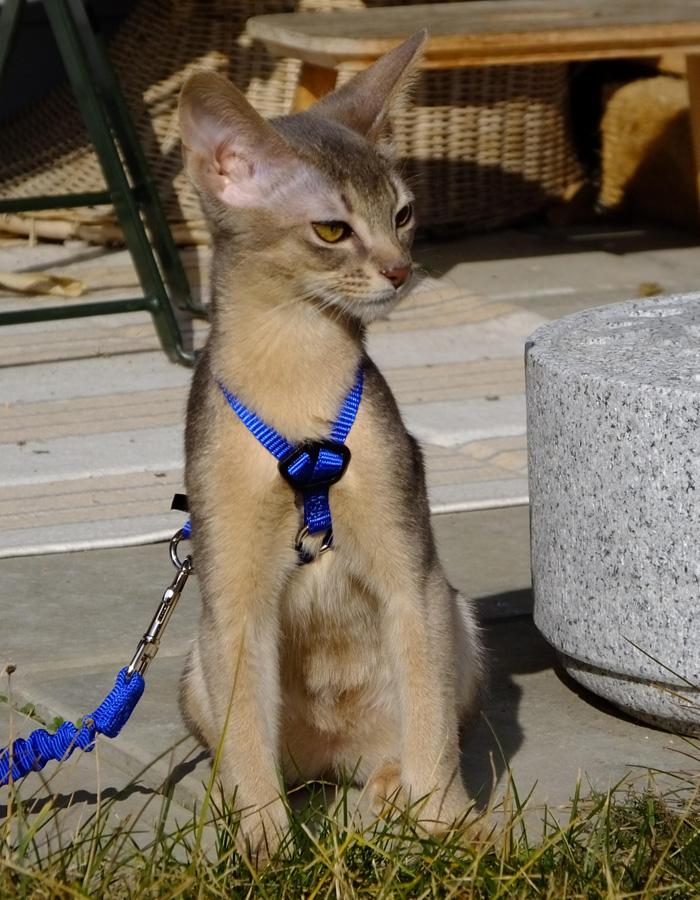 Mehrkatzenhaushalt-17