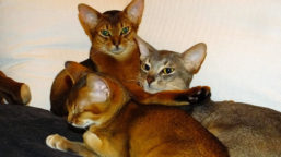 Mehrkatzenhaushalt-1VS