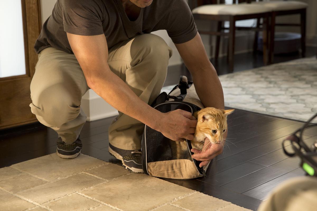 cat companion animal carrier 02