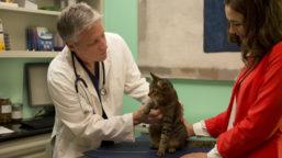 Tierarzt-CheckUp-Katze2-Vorschau