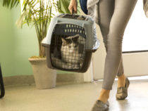 Tierarzt-Wartezimmer-Vorschau