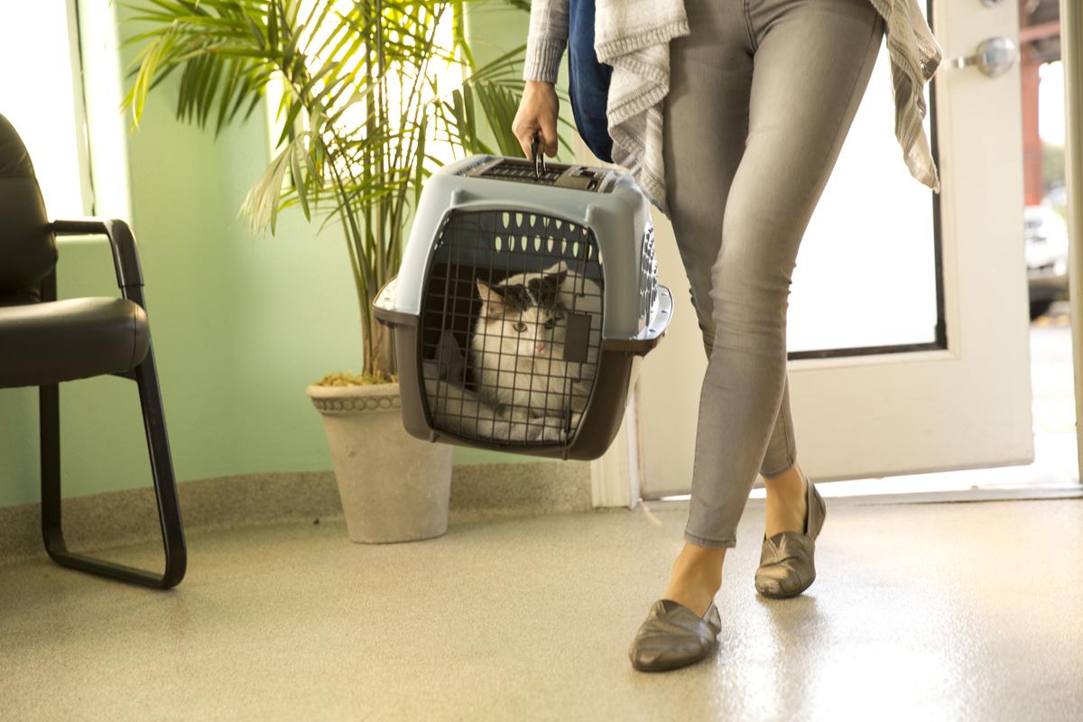 Tierarzt-Wartezimmer