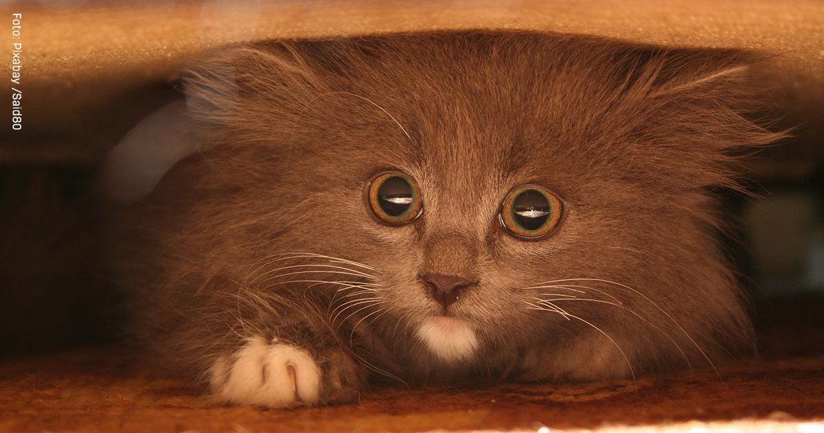 warum versteckt sich meine katze katzen lieben feliway. Black Bedroom Furniture Sets. Home Design Ideas